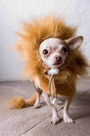 Lion Halloween Costumes Dogs 25 Pet Halloween Costumes Ideas Puppy