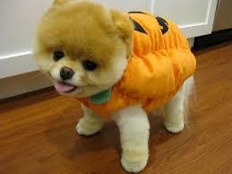 Puppy Halloween Costumes 15 Puppies Halloween Costumes Pophangover