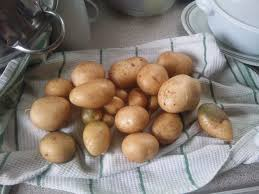 harvesting potatoes how and when to dig up potatoes