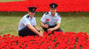 plant remembrance plants in your backyard for anzac day encyclopidia