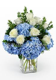 hydrangea arrangements sympathy arrangement with blue hydrangea white roses pt