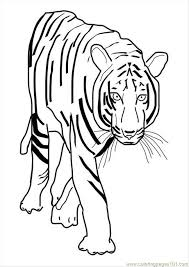 56 ures pages photo tiger p10101 coloring free tiger