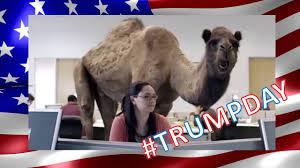 Hump Day Camel Meme - trump day hump day youtube
