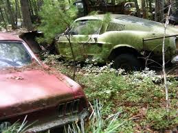 rhode island forest images Massive secret mustang junkyard found in rhode island forest jpg