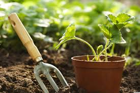 Urban Gardening Tips Natural Plants In Pots Green Garden On A Balcony Urban Gardening