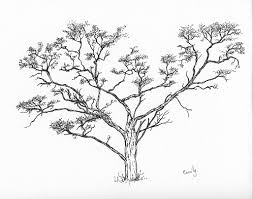 tree sketch butterflyhands