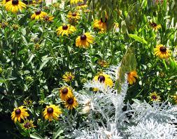 Wpa Rock Garden by Cottage Appreciation Gardens For Goldens