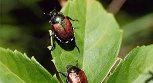 Gardening Pest Control - garden pest control singapore general landscaping services