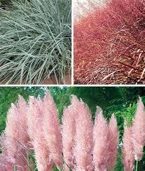 12 best australian grasses strappy leaved plants images