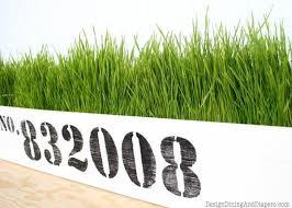 diy wheatgrass planter taryn whiteaker