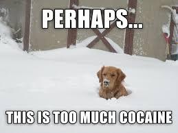 Coke Bear Meme - cocaine bear gets some help imgur