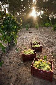 Bimago Fiori by 44 Best Nature Images On Pinterest Vineyard Nature And Vineyard