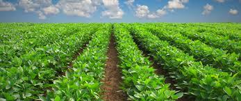 bureau d 騁udes hydraulique idea bureau d etude etude hydraulique tunisie service agricole