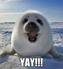 Yay Meme - yay happy weasel seal quickmeme