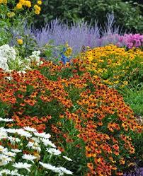 Summer Flower Garden Ideas - best 25 phlox flowers ideas on pinterest creeping phlox ground