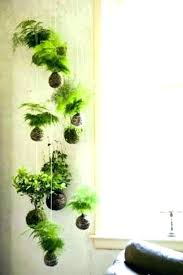 plant wall hangers indoor hanging plant wall hanging garden hanging plant wall decor hanging