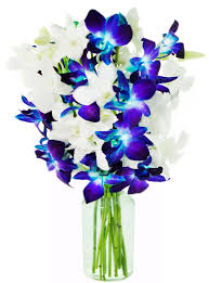 blue and purple orchids kabloom rainbow orchid bouquet of 5 blue