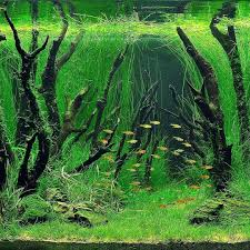 japanese aquascape japanese aquascape coryc me