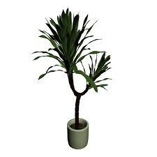 Yucca Wohnzimmer Yucca Palme Einrichten U0026 Planen In 3d