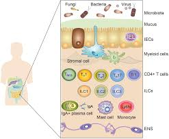 frontiers breast milk and solid food shaping intestinal immunity