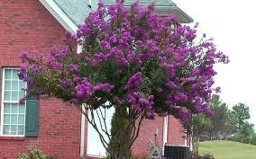 ornamental trees for planting to houses wearefound home design