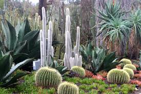 Botanical Gardens Huntington California Travel Visiting The Huntington Botanical Gardens In