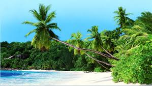 coconut tree on sale for 1m guyana chronicle