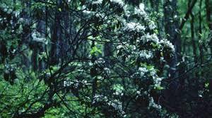 Mississippi landscapes images Native shrubs for mississippi landscapes mississippi state jpg