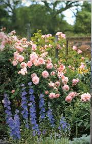 cottage garden flowers 186 best english cottage gardens images on pinterest gardening