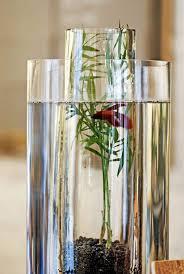 Betta Fish Vase With Bamboo 27 Indoor Water Garden Ideas Small Garden Ideas