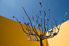 wrought iron tree tijuana baja california mexico wrought flickr