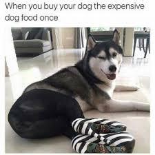 Benson Dog Meme - dog memes kappit
