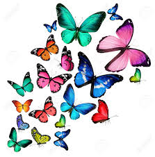 many color butterflies isolated on white background stock photo