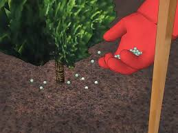 Planting Christmas Tree Seedlings How To Plant Leyland Cypress Wikihow