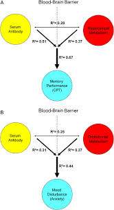 Web Analysis Report Sle by Brain Metabolism And Autoantibody Titres Predict Functional