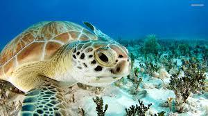 Ringed Map Turtle Sea Turtle Wallpaper Bedroom Ideas Pinterest Turtle And Animal