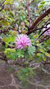 native san diego plants 22 best blooms images on pinterest san diego the sans and