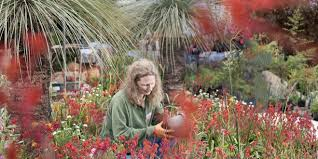 west australian native plants wago u203a in focus grady brand senior curator at kings park and
