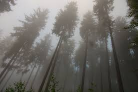 wallpaper tumblr forest foggy forest tumblr hd desktop wallpaper instagram photo