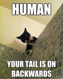 Shower Meme - manx meme google search my home iom pinterest manx meme and