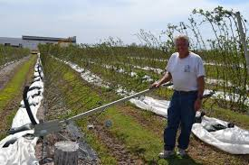 berry farm still growing strong after 20 years crops