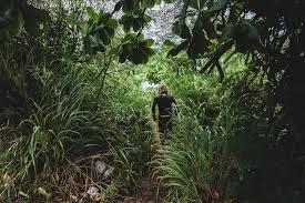 free photo path tropical jungle trail free image pixabay