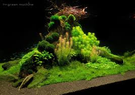 Nature Aquascape Nature U0027s Chaos Aquascape By James Findley Journal The Green