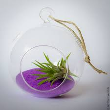 hanging glass globe air plant terrarium air plant worlds
