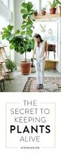 466 best garden love images on pinterest gardening plants and