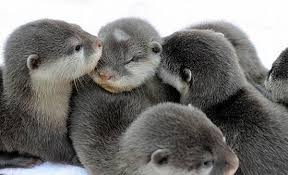 Sea Otter Meme - baby otters animals know your meme