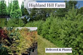 buy trees in bulk at highland hill farm wholesale retail nursery