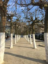 tim burton trees reach the