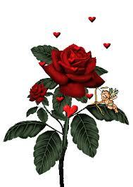 imagenes de amor con rosas animadas imágenes de amor con movimiento gifs animados para enamorar