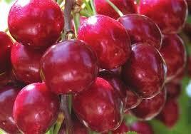 buy fruit online online orders of cherries surge